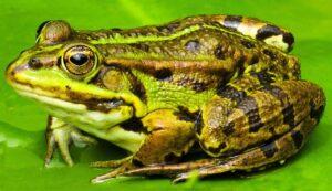 žába - tvoření s dětmi